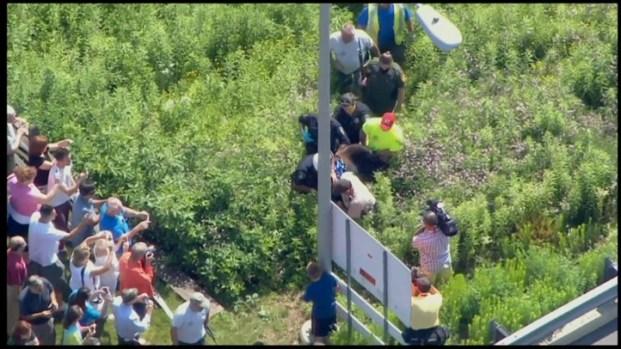[PHI] Bear Captured in Bucks County