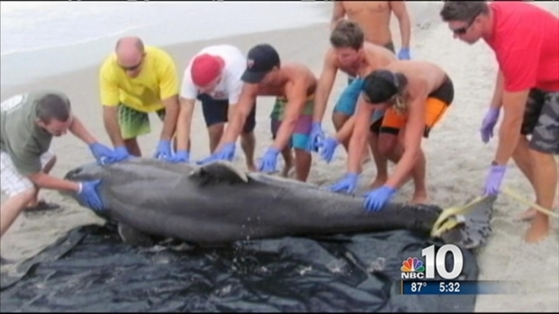 [PHI] Virus Likely Causing Dolphin Deaths