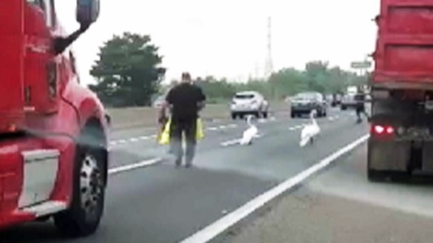 [NY] Hurt Swan, Protective Mate Stall Traffic on NJ Turnpike