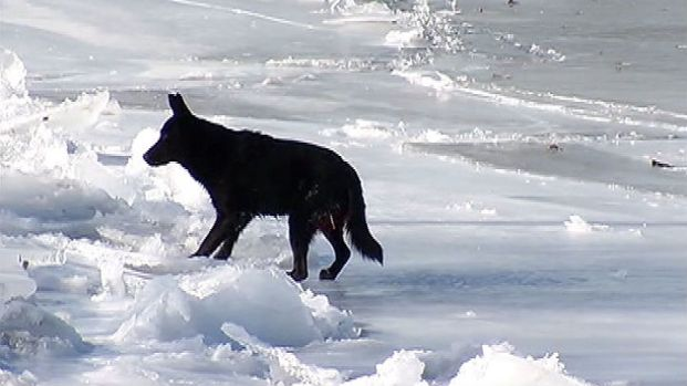 [NATL-CHI] Chicago Police Rescue Dog Trapped On Ice