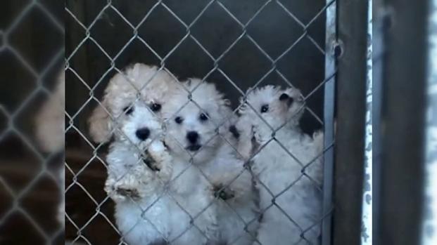 [DGO] City Council Mulls Pet Store Ban