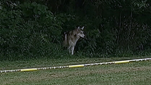 [PHI] Residents Spot Wolf-Dogs in Pennypack Park