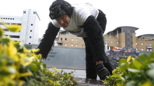 Man in Gorilla Suit Is Still Crawling the London Marathon