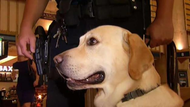 Sniffing Out Potential Trouble at 30th Street Station