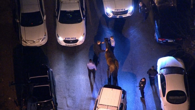 WATCH: Police Capture Runaway Horse Galloping Through Philly