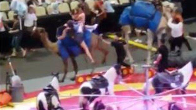 7 Injured When Startled Camel Bucks at Pittsburgh Circus