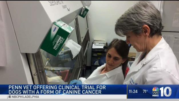 Penn Vet Tackles Canine Cancer