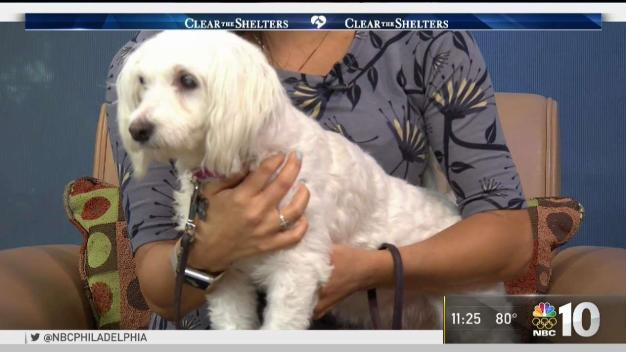 City of Elderly Love Introduces 4-Legged Betty White