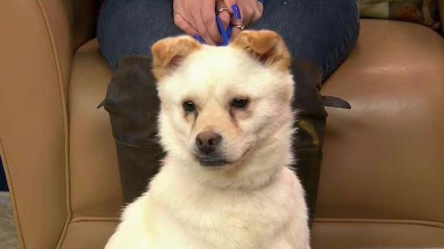Meet Happy, the Pup Saved from an Asian 'Meat Trade Market'