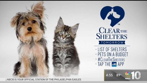 Clear the Shelters: These Pets Need Homes