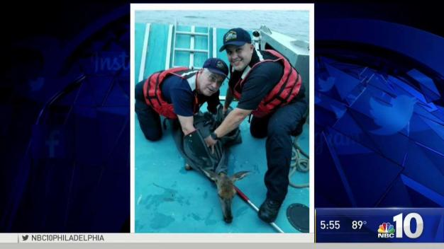 Deer Rescued From Delaware River