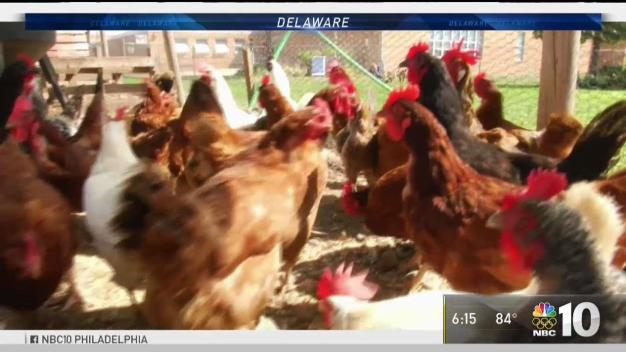 Del. Lawmaker Pushes for Farm Animals in City