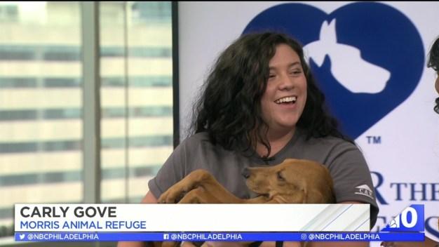 Dunk a Dallas Fan to Help Rescue Animals