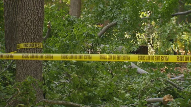 Father and Son Injured After Falling Tree Branch in Neshaminy State Park