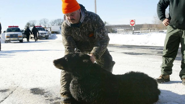 NJ Hunt Culls 139 Bears Over 6 Days