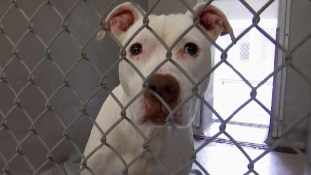Clear the Shelters: Homeless Pets Need Homes All Year Long