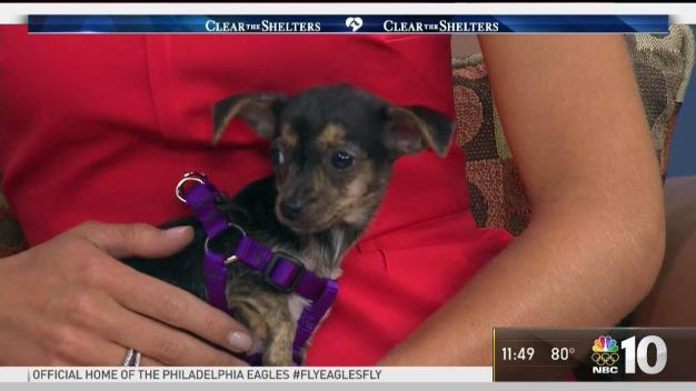 Kitten, Puppy Up for Adoption in Camden County