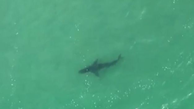 Paraglider Spots Sharks Near Surfers
