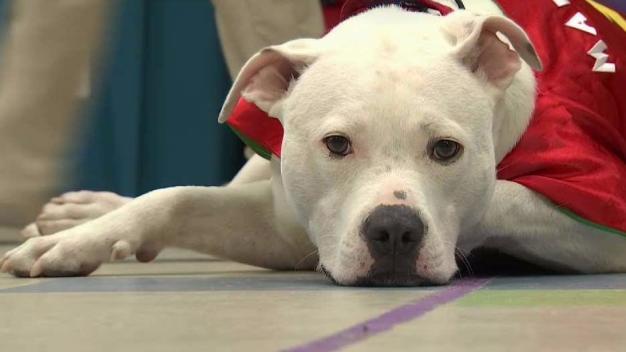Superhero Dog Helps Hearing-Impaired Kids