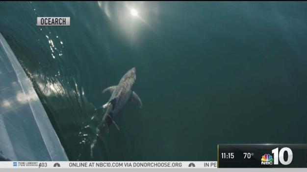 Tracking Great White Sharks at the Jersey Shore