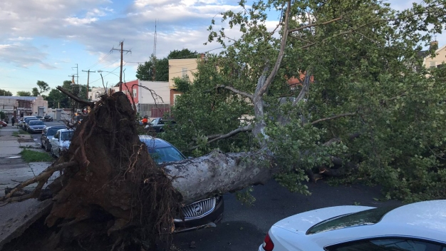 Storms Topple Trees, Leave Thousands in the Dark