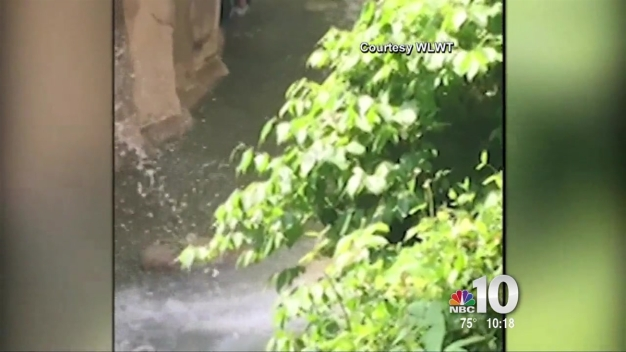WATCH: Boy Falls Into Gorilla Exhibit at Ohio Zoo