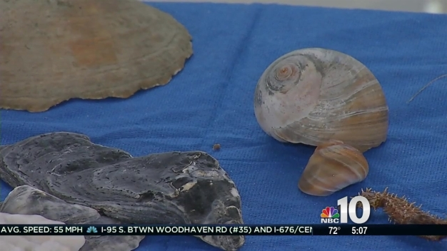 What's That Shell? Learn Something New About Jersey Shore Beach Creatures