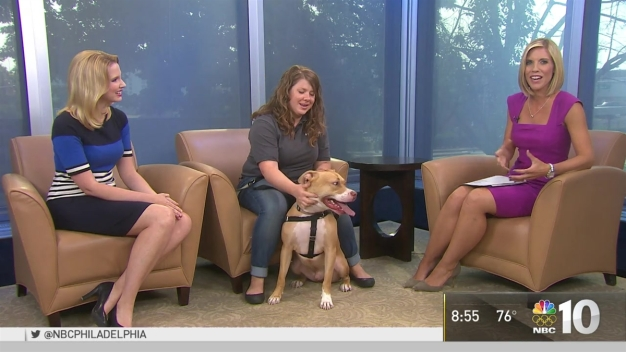 Clear the Shelters: Rocky the Dog Looking for a Home