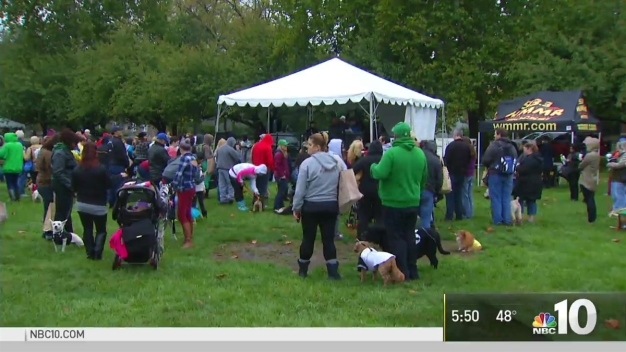 Mutt Strut Takes Over Navy Yard