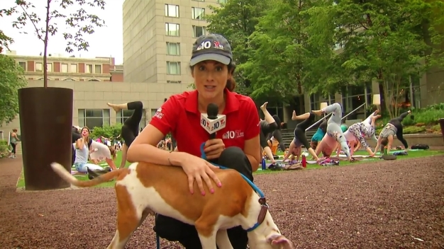 Clear the Shelters: Puppy Yoga with Morris Animal Refuge
