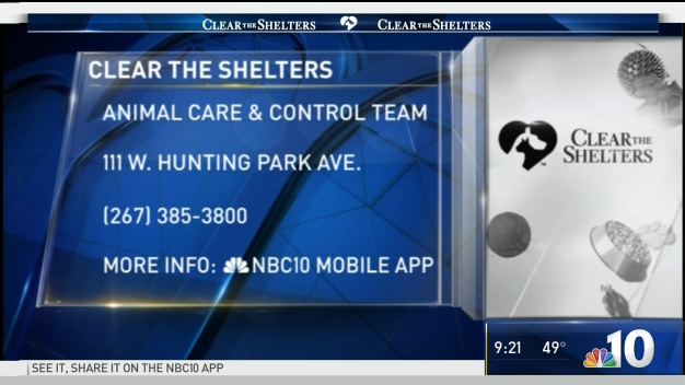 Clear the Shelters: Give 'Jackie' A Furever Home