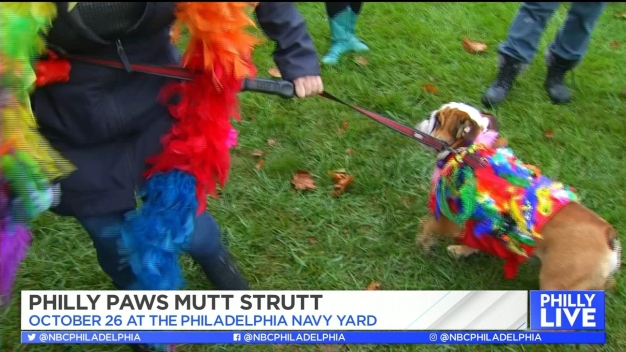 Sweat with Your Pup at the Mutt Strut