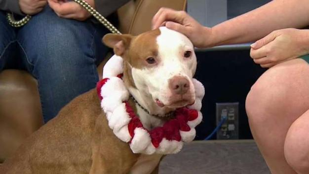 Clear the Shelters: You Can Adopt Gingerbread