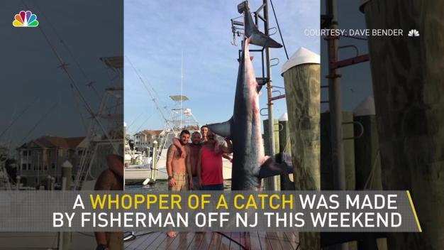 Huge Shark Caught Off New Jersey Coast