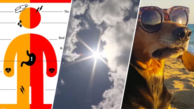 Heat Wave Survival Tips: How to Stay Safe in Hot Weather