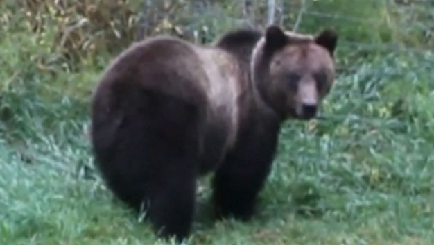 Wyoming School Says Guns Not for Grizzly Bears