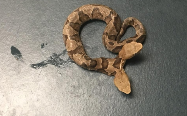 Two-Headed Snake Found in Northern Virginia