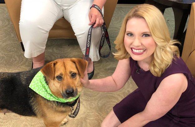 Meet Aphrodite: A Lover Of a Dog Up for Adoption