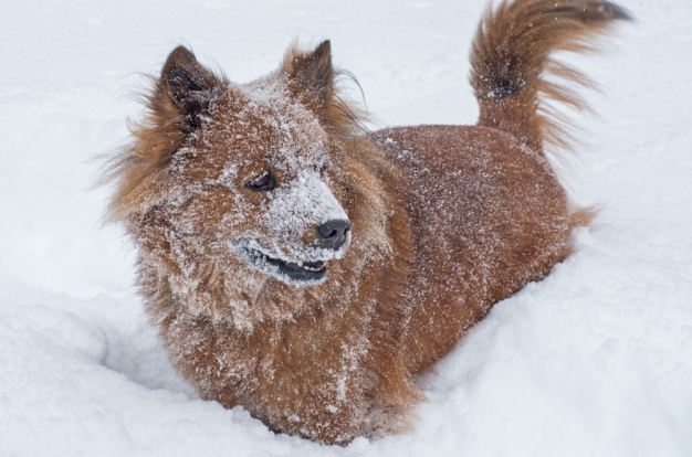 County Adopts Ordinance to Protect Dogs From Weather
