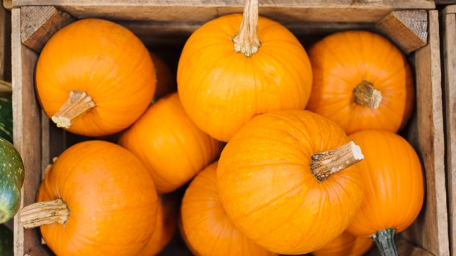 Not Enough Pumpkins for Thanksgiving?