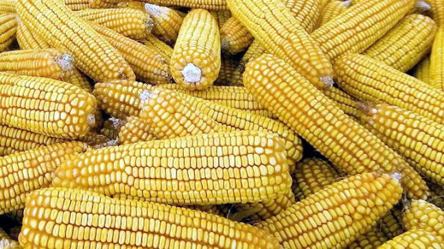 Listeria Fears Cause Recall of Cases of Frozen Corn