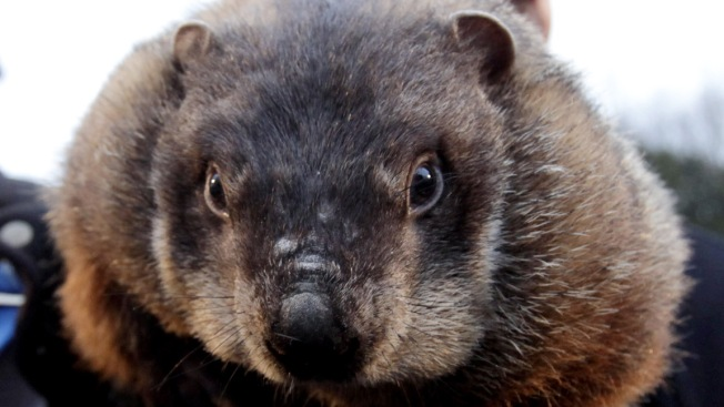 3 Charged With Tossing Dead Groundhog Into Bar