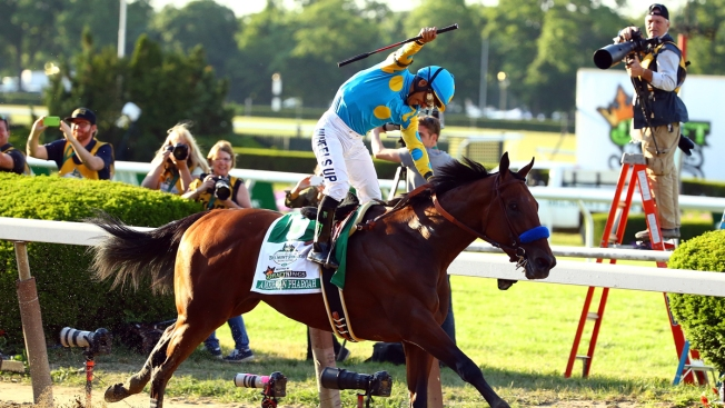 American Pharoah Competes In Jersey Shore S Haskell Invitational