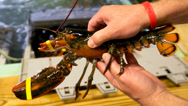Lobster Prices High, But Dropping as Summer Approaches