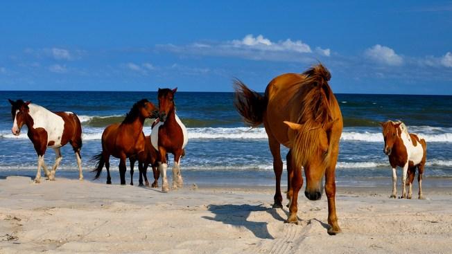 PHOTOS: Top 10 Beaches Near the DC Area