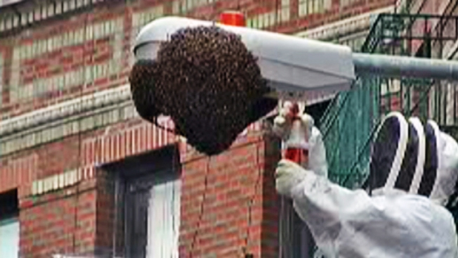 No Dismissal of Suit by Beekeeper Who Cleaned Up Interstate Swarm