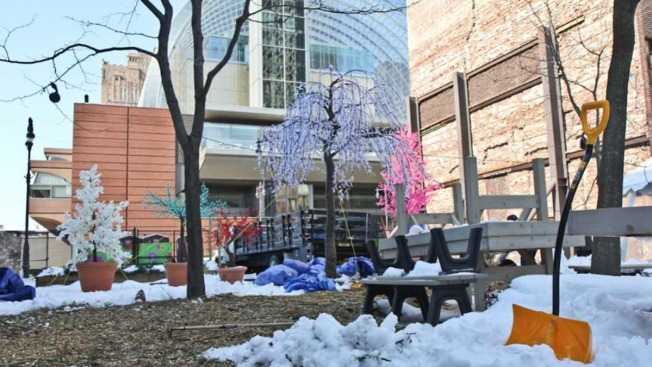 Unseasonal Garden Spot Blossoms With Beer, Hopes of Spring