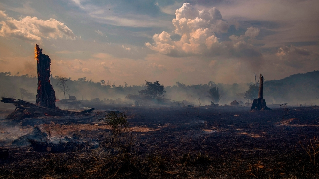 Brazil Bans Most Burning for 60 Days to Curb Amazon Fires