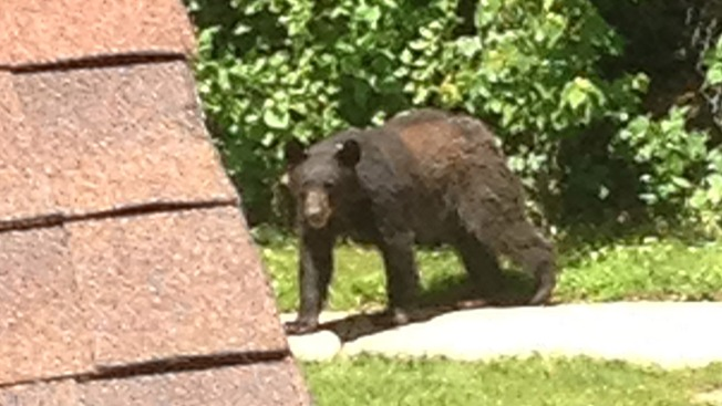 Students, Residents Warned to Stay Indoors After Bear Sighting