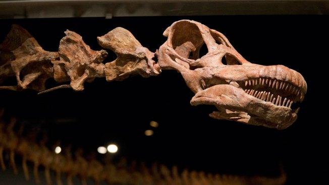 Pennsylvania Scientist Helps Unearth Dinosaur